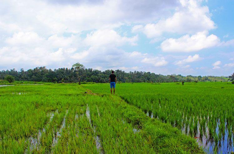 arrozalescamino