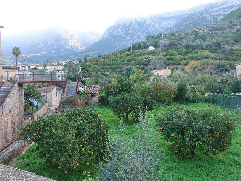 Zona de naranjos en el pueblo de Soller