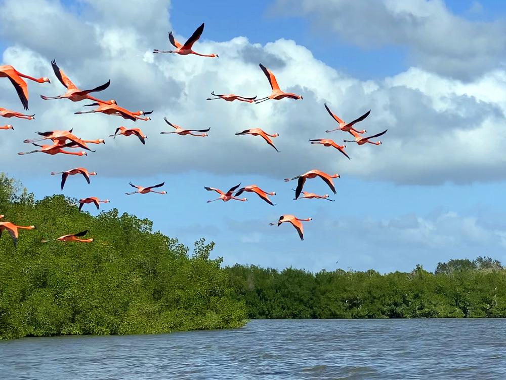 Flamencos volando en Laguna Guanaroca
